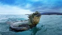 Galapagos Islands show
