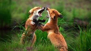 Mortal Combat photo