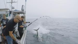 غزاة التونة صورة