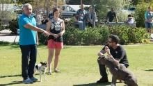Therapy for Dogs show
