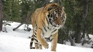 Ultimate Predators photo