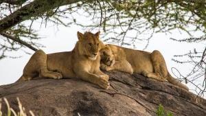 Lion's Den photo