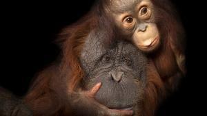 Gorgeous Wildlife 照片