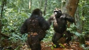Kingdom of The Apes photo