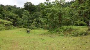 Into The Jungle photo