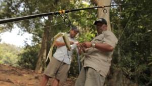 Jungle Jaws photo