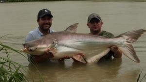 600 lb Goldfish photo
