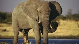حیوانات وحشی شده عکس