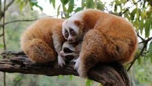 Amazing Species photo