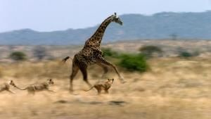 Reserves of Tanzania photo