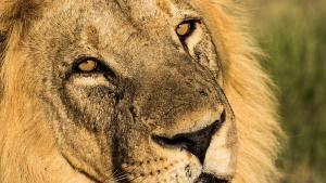 Botswana Wildlife 照片