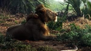 تولد دوباره ی حیات وحش آفریقا عکس