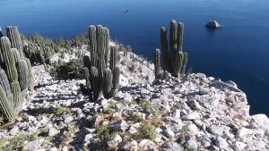 صحراء سونورا - الوصول إلى الحد الأقصى صورة