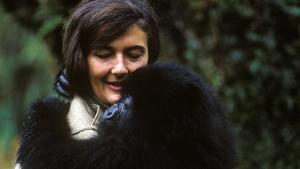 Dian Fossey's Legacy 照片