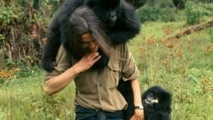 Dian Fossey's Legacy photo