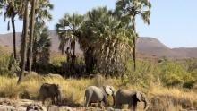نامبيا ملاذ العمالقة برنامج