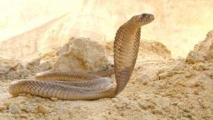 الحياة البرية في الشرق الأوسط صورة