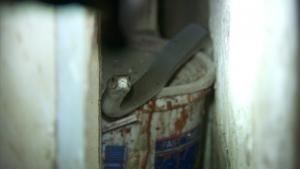 Cobra In The Kitchen photo