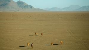 Deadly Desert photo