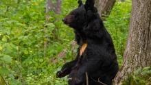 Amur: Asia's Amazon The Black Dragon show