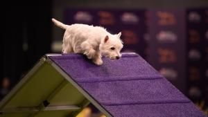 Agility action photo
