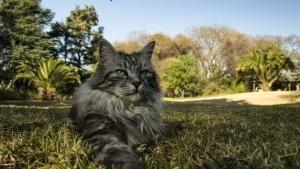 روح القطة صورة