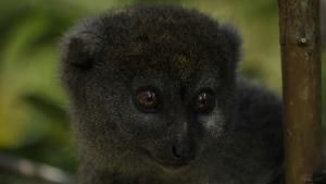 Madagascar's Fantastic Creatures photo