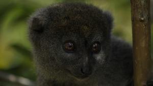 موجودات خارق العاده ی ماداگاسکار عکس