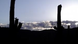 صحرایی در مجاورت دریا ـ سرزمین غول پیکرها عکس