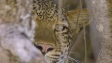 Africa's Hunters show