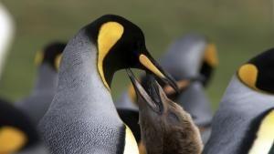 Chilean Wildlife photo