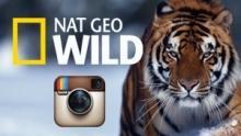 Nat Geo Wild sur Instagram