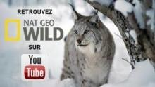 Nat Geo Wild sur Youtube