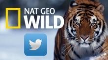 Nat Geo Wild sur Twitter