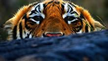 老虎私生活 Tiger Man 節目