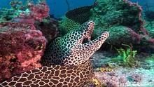海底異形帝國 Moray Eels: Alien Empire 節目