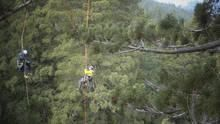 World's Tallest Tree show