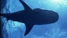 Στα λημέρια του Καρχαρία - τίγρη ΔΕΙΤΕ