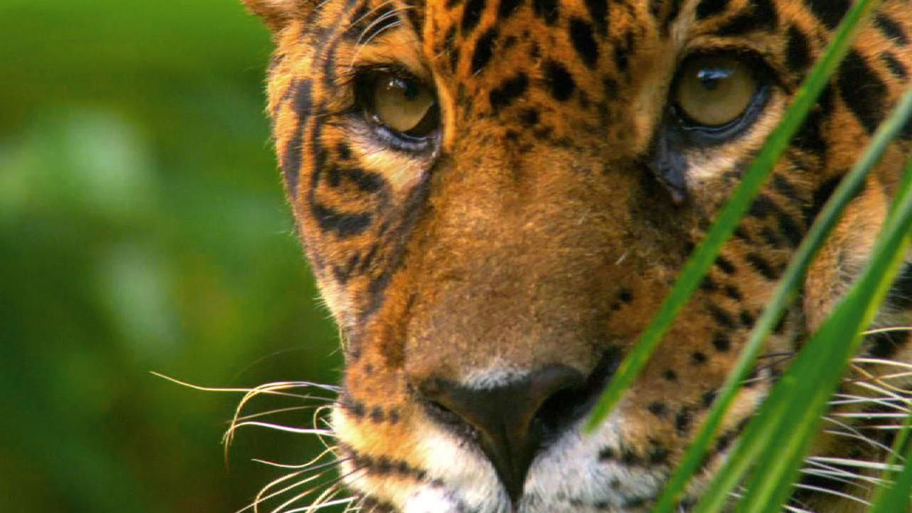 Wild Amazon - National Geographic Channel - UK