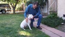 金牌馴狗師2  Dog Whisperer 2 節目