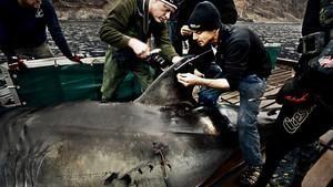 Badacze rekinów