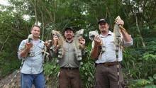 Floridas Python-Jäger unterwegs Programm