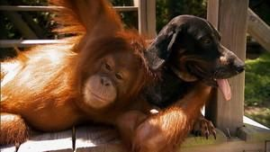 Állatvilág: meglepő párosok film