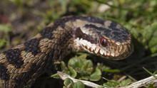 世界致命毒蛇 World's Deadliest Snakes 節目