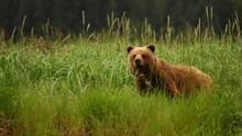 Medvék szigete film