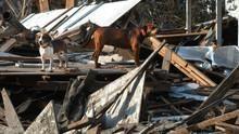 Les animaux de Katrina Voir la fiche programme