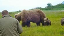 Medvék nomádja film