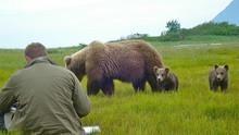 Im Bann der Bären Programm