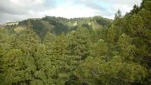 Bir Devin Anatomisi: Redwoods SAYFAYA GİT