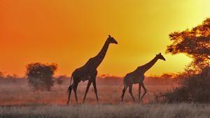 塞倫蓋蒂大草原 The Great Serengeti 節目